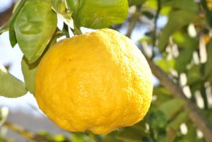 Did you know: lemon essential oil also brightens the skin and helps fight acne!
