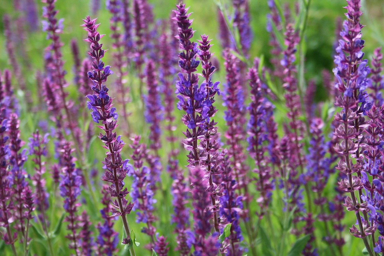 Did you know that lavender essential oil also stimulates hair growth and helps regrow bald patches!