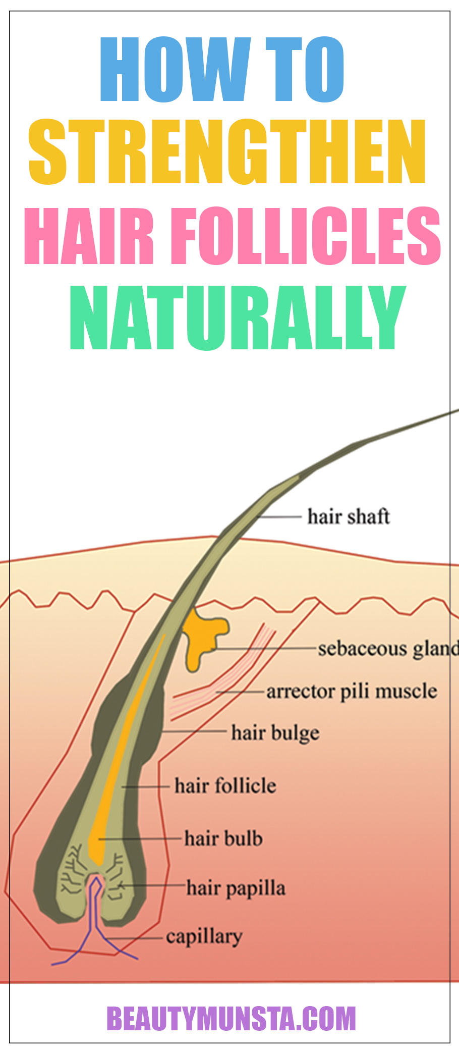 Before we look at how to strengthen hair follicles naturally, let's first understand what exactly hair follicles are and what their purpose is in promoting healthy and strong hair.