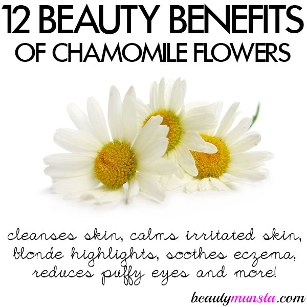 beauty benefits of chamomile flowers