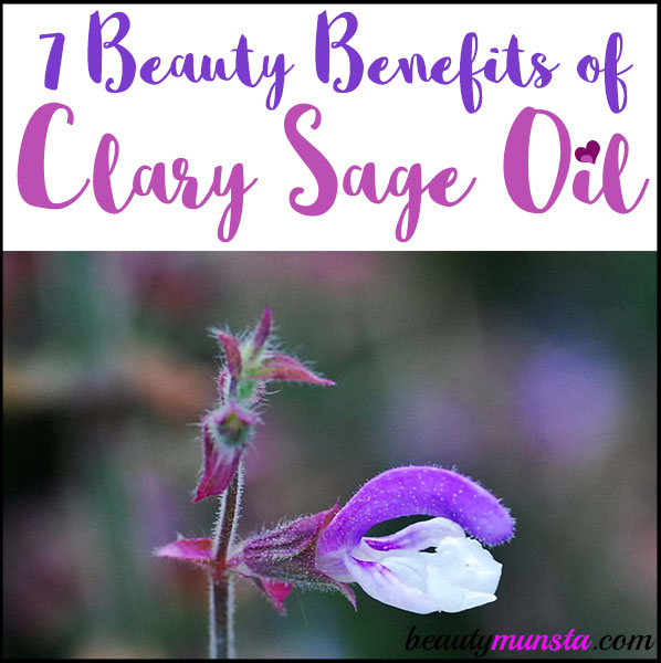 Clary sage oil is oh-so-amazing for beauty! Read 7 beauty benefits of clary sage essential oil in this post!