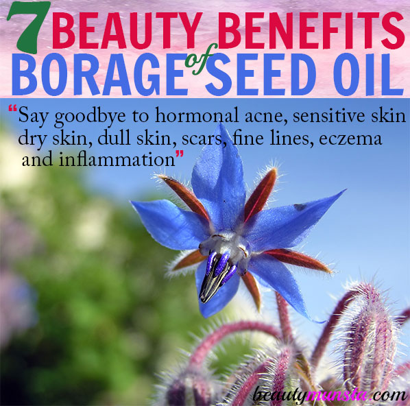 Discover 7 ballistic beauty benefits of borage seed oil! It's helpful for hormonal acne, aging skin, eczema and more!