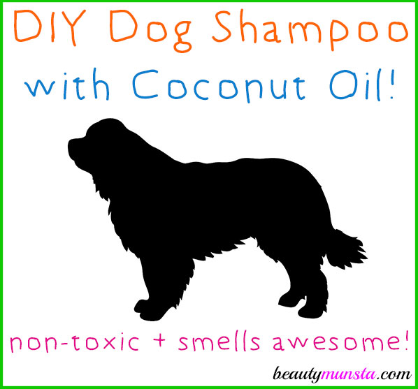 Learn how to make a DIY coconut shampoo for dogs right at home!