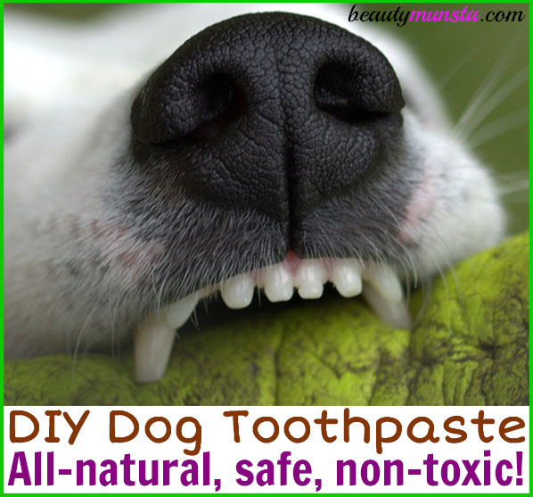 Make your own DIY dog toothpaste right at home!