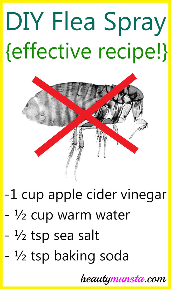 Homemade Flea Spray with Vinegar and Baking Soda
